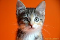 """Помет № 124 """"Е"""" от 13.02.16. 4 котенка"""