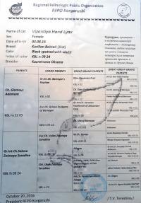 Кошка Int.Ch. Византия Хенд Линкс, 03.08.16 г.р., окрас: черная пятнистая с белым ПДШ, n09 24 KBL.